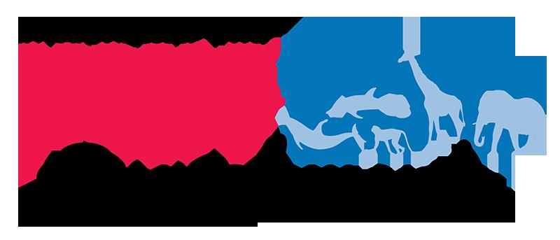 KONG ZOO